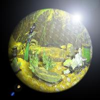 eightpanesofglass - Sand Fleas and Mayflies Cover Art